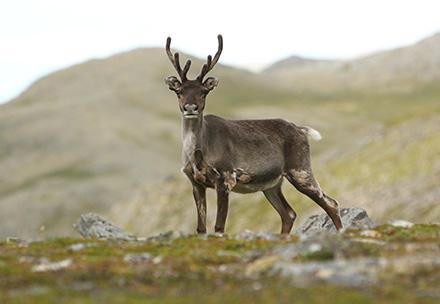 Troms Og Finnmark fylke lite bilde 1